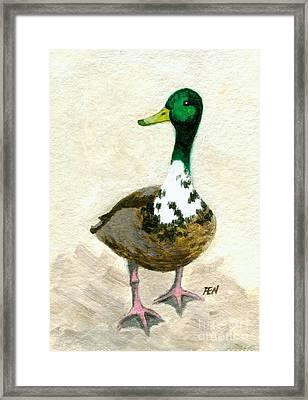 A Proud Duck Framed Print