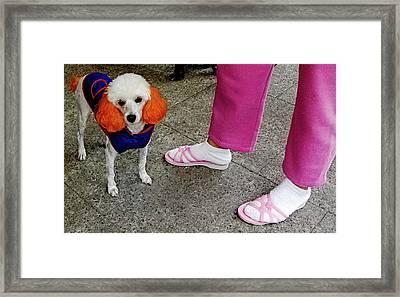 A Punk Rock Poodle Framed Print