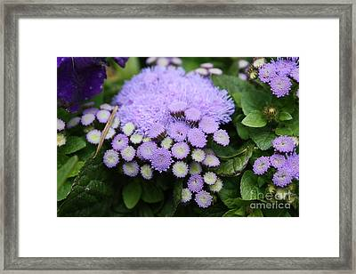 Framed Print featuring the photograph A Purple Morning by Edward R Wisell