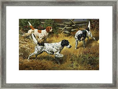A Quail Hides In A Covert From Pointing Framed Print
