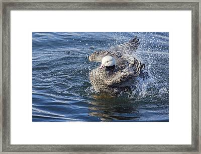 A Quick Bath Framed Print by Tim Grams