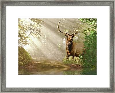 A Quiet Sunset In The Woods Framed Print