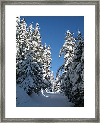 A Quiet Walk In The Forest Framed Print by Michael Canning