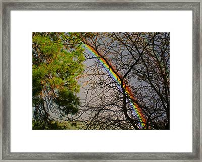 A Rainbow Tree Framed Print by Ben Upham III