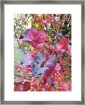 A Rainy Day In November Framed Print