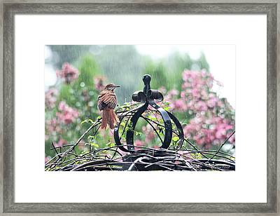 A Rainy Summer Day Framed Print