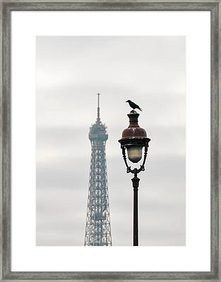 A Raven On Top Of Street Light In Paris Framed Print by Dutourdumonde Photography