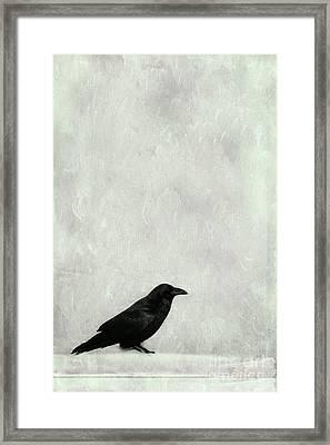 A Raven Framed Print