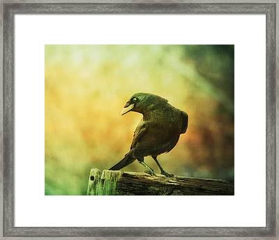 A Ravens Poise Framed Print