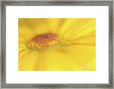 A Ray Of Sunshine Framed Print by Roy McPeak