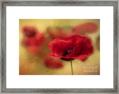 A Red Poppy Framed Print by Darren Fisher