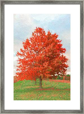 A Red Tree Framed Print by Jeff Oates Photography