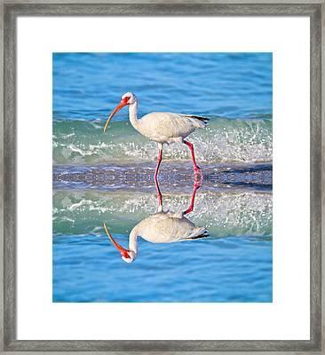 A Reflective Walk Framed Print
