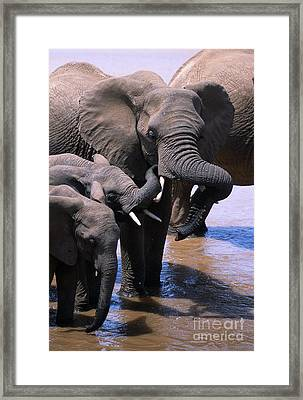 A Refreshing Moment Framed Print by Sandra Bronstein