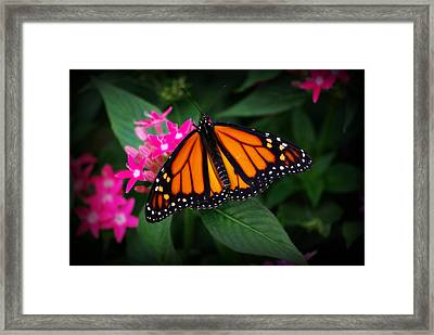 A Resting Place Framed Print