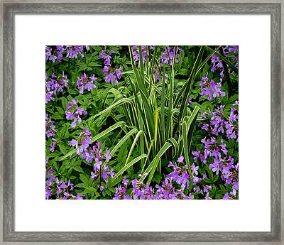 A Ring Of Purple Flowers Framed Print
