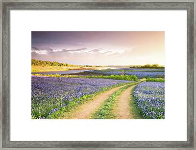 A Road To Bluebonnet Heaven Framed Print by Ellie Teramoto