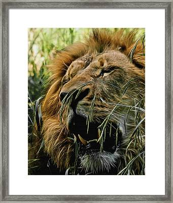 A Roar In The Grass Digital Art Framed Print