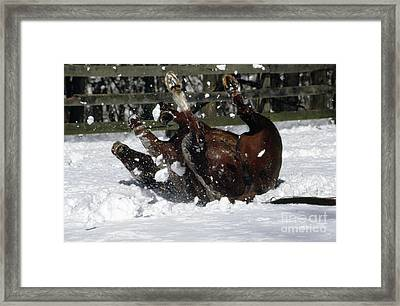 A Roll In The Snow Framed Print by Nicki McManus