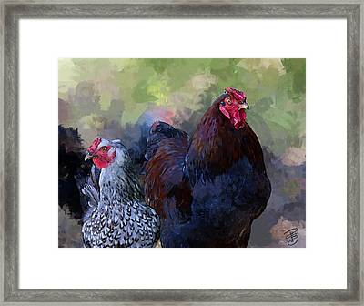 A Rooster And A Hen Framed Print