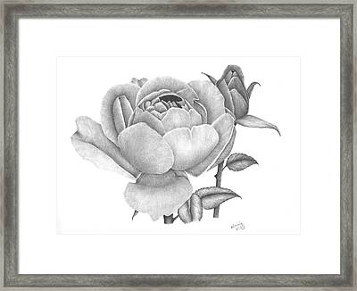 A Rose Bloom Framed Print