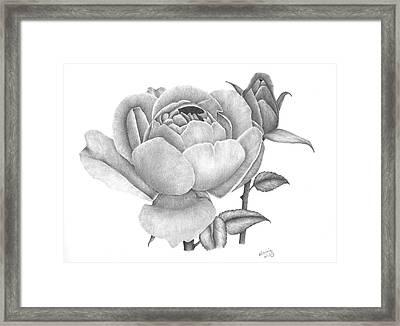 A Rose Bloom Framed Print by Patricia Hiltz