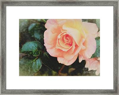 A Rose For Kathleen Framed Print