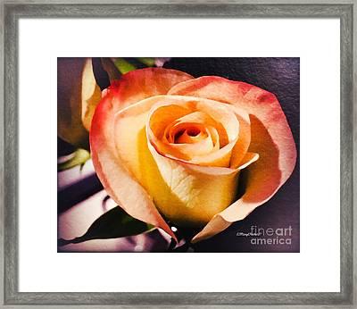 A Rose For Lauren Framed Print by MaryLee Parker