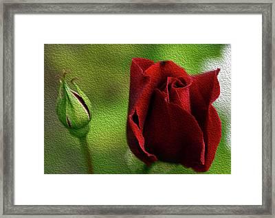 A Rose For Mother Framed Print