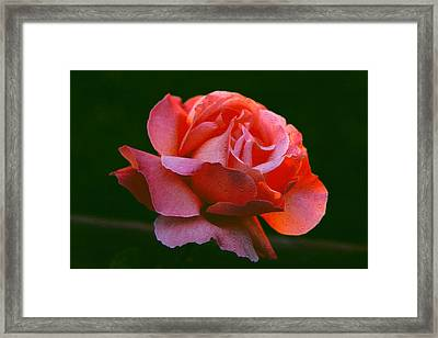 A Rose For Rose Framed Print by Michael Durst