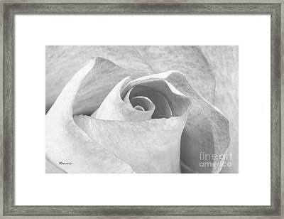 A Rose Is A Rose Black And White Floral Photo 753  Framed Print