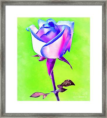 A Rose Of A Different Color Framed Print