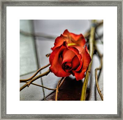 Framed Print featuring the photograph A Rose On Bamboo by Diana Mary Sharpton