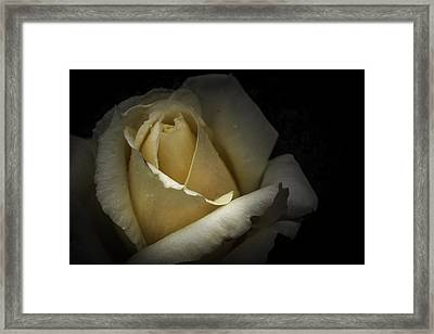 Framed Print featuring the photograph A Rose by Ryan Photography