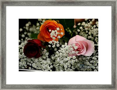 A Rose To You Framed Print