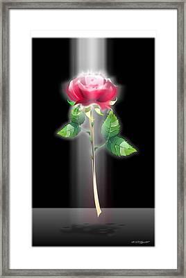 A Rose Framed Print by William R Clegg