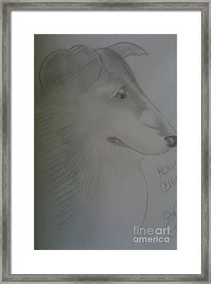 A Rough Collie Dog Framed Print