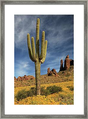 Framed Print featuring the photograph A Saguaro In Spring by James Eddy