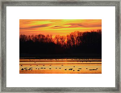 A Scene At Bombay Hook National Framed Print by George Grall