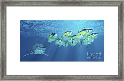 A School Of Yellowfin Tuna Is Followed Framed Print