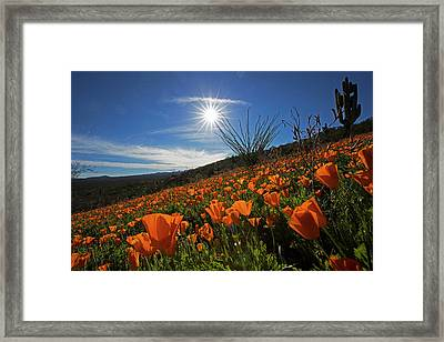 A Sea Of Poppies Framed Print