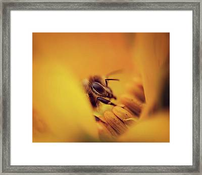 A Sea Of Yellow Framed Print