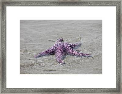 A Sea Star Lies In The Surf In The Gulf Framed Print by Taylor S. Kennedy