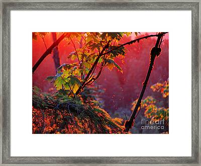 A Season's  Sunset Dusting Framed Print by Natalie Ortiz