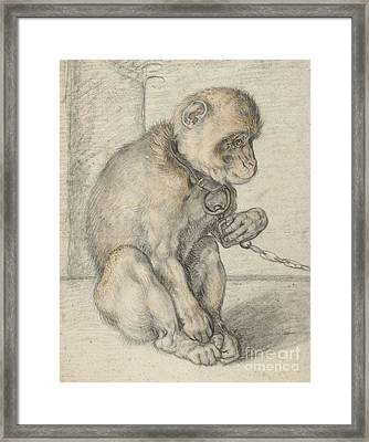 A Seated Monkey On A Chain Framed Print