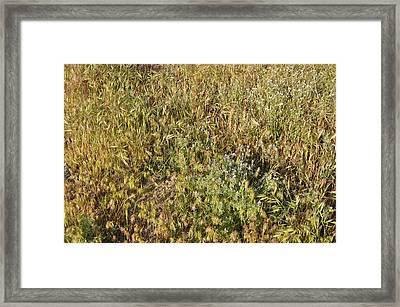 A Secret Beauty Framed Print