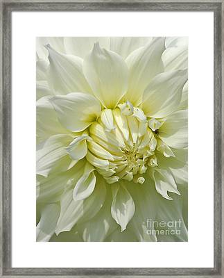 A Secret Visitor Framed Print by Cindy Manero