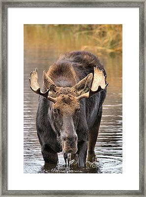 A Serious Glare Framed Print by Adam Jewell