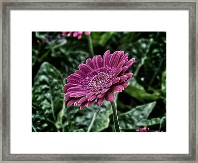 A Shade Of Purple Framed Print