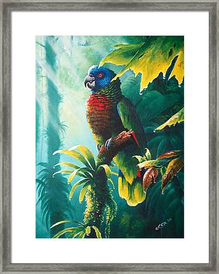 A Shady Spot - St. Lucia Parrot Framed Print by Christopher Cox